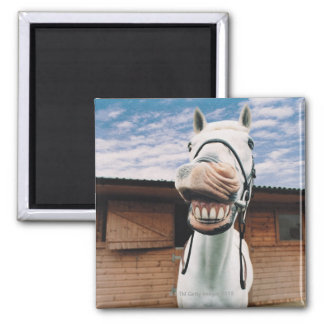 Close-up of Horse with Mouth Open Magnet