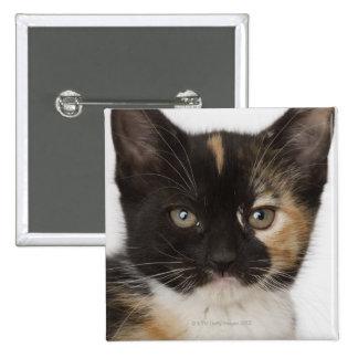 Close up of kitten 15 cm square badge