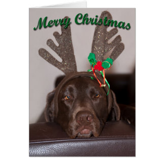 Close Up Of Labrador With Antlers Photograph Card