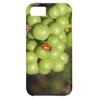 Close up of lady bug on green Pinot Noir grapes iPhone 5 Cover