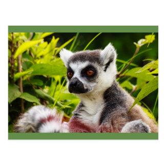 close-up of lemur on stamp postcard