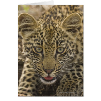Close up of Leopard, Greater Kruger National 2 Card