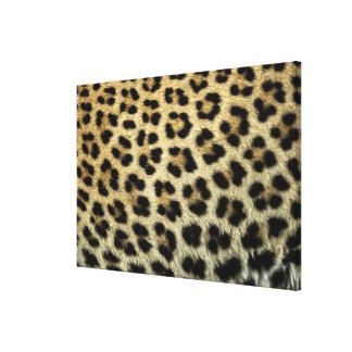 Close up of Leopard spots, Africa Canvas Print