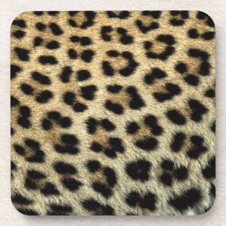 Close up of Leopard spots, Africa Coaster