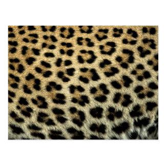 Close up of Leopard spots, Africa Postcard