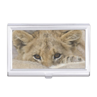Close up of lion cub's face business card cases
