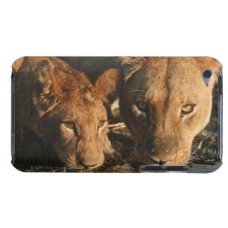 Close up of Lioness (Panthera leo) and cub iPod Touch Case