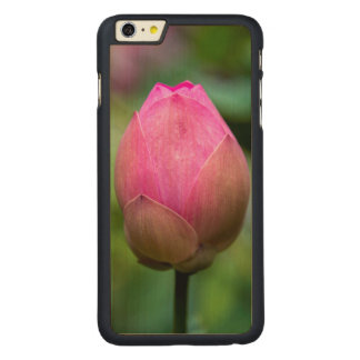 Close-up of lotus flower bud, Bali Carved® Maple iPhone 6 Plus Case