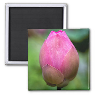 Close-up of lotus flower bud, Bali Magnet
