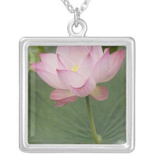 Close up of Lotus flower, Nelumbo nucifera), Square Pendant Necklace