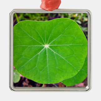 Close up of Nasturtium leaves face-on Christmas Tree Ornaments