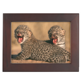 Close-Up Of New Born Leopard (Panthera Pardus) Memory Boxes