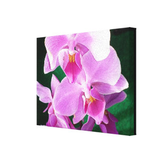 Close up of orchid blossoms canvas print