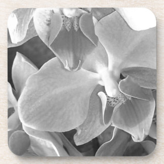 Close up of orchid blossoms in gray scale coaster