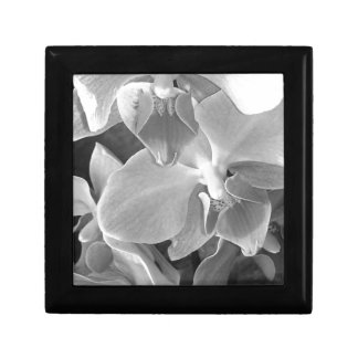 Close up of orchid blossoms in gray scale gift box