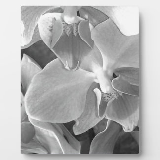 Close up of orchid blossoms in gray scale plaque