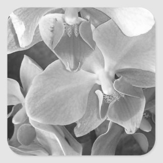 Close up of orchid blossoms in gray scale square sticker