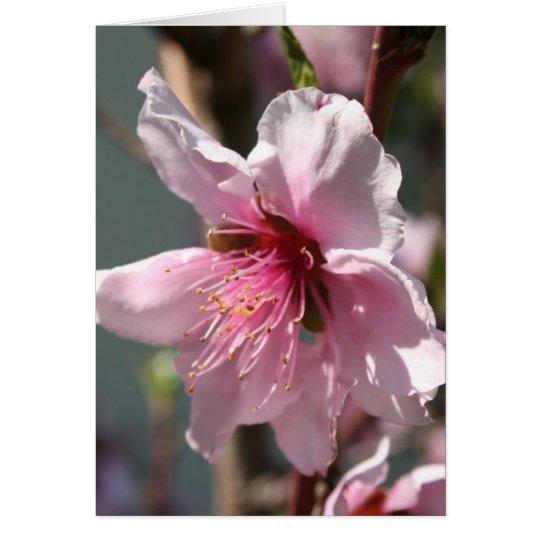 Close Up of Peach Tree Blossom Card