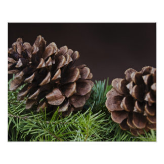 Close-up of pine cone poster