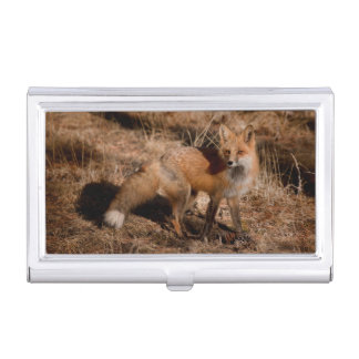 Close-up of red fox business card holders