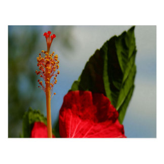 Close Up of Red Hibiscus Stamen and Pollen Postcard