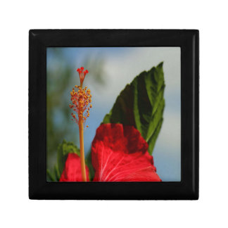 Close Up of Red Hibiscus Stamen and Pollen Small Square Gift Box