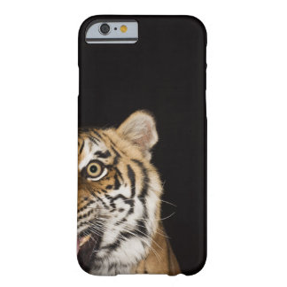 Close up of roaring tiger's face barely there iPhone 6 case