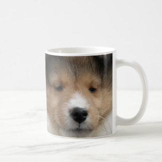 Close up of Shetland sheepdog puppy face on mug