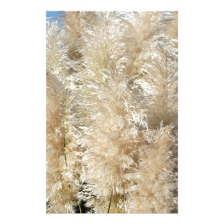 Close-Up of Tall Pampas Grass Plumes Stationery