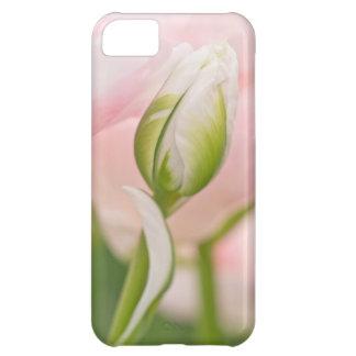 Close-up of tulip and bud iPhone 5C case