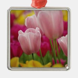 Close-up of tulip flower, Kuekenhof Gardens, Silver-Colored Square Decoration