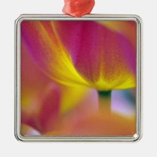 Close-up of underside of tulip flower, Kuekenhof 2 Silver-Colored Square Decoration