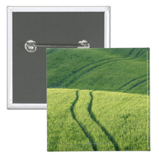 Close up of Wheat Field with Tire Tracks Pinback Button