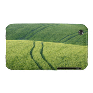 Close up of Wheat Field with Tire Tracks, iPhone 3 Case