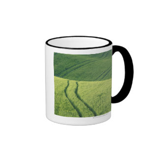 Close up of Wheat Field with Tire Tracks, Mugs