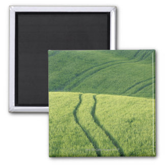 Close up of Wheat Field with Tire Tracks, Square Magnet