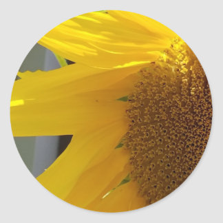 Close Up of Yellow Sunflower Classic Round Sticker
