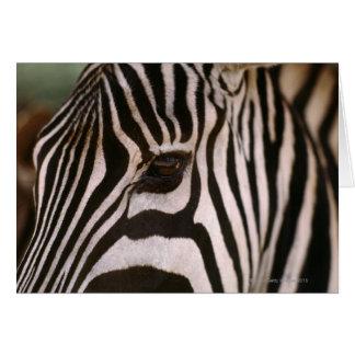 Close-up of zebra's head greeting card
