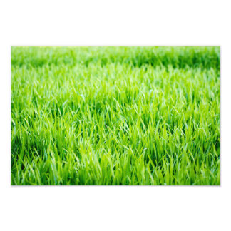 Close-up on blades of grass photo print