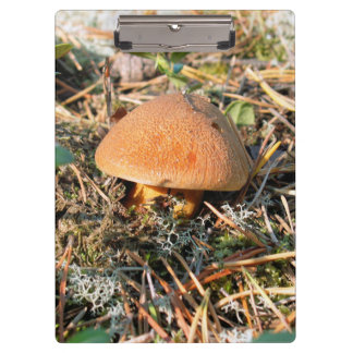 close up one mushroom clipboard