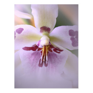 Close-up orchid card postcard