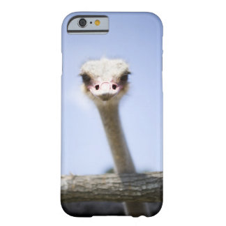 Close up Ostrich head Barely There iPhone 6 Case