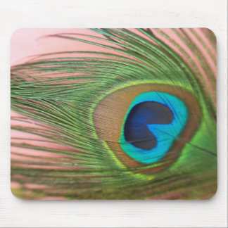 Close up Peacock Feather with Pink Mouse Pad