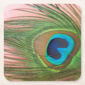 Close Up Peacock Feather with Pink Still Life Square Paper Coaster