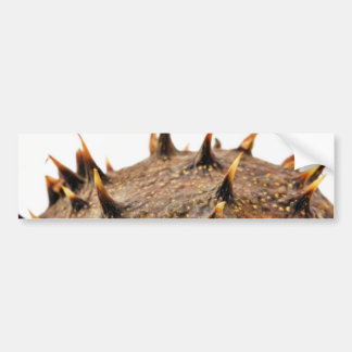 Close Up Photo Of Conker Thorns Bumper Sticker
