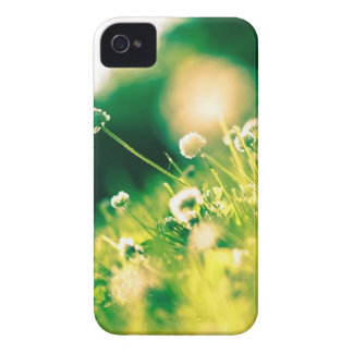 Close Up Photo of Dandelion iPhone 4 Case-Mate Case