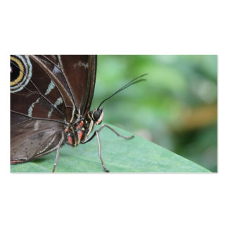 Close Up Picture of a Butterfly. Pack Of Standard Business Cards