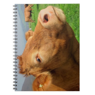 Close Up Portrait Photo of a Brown Cow Notebook