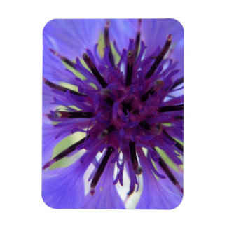 Close up Purple Bachelor Button Rectangular Magnet