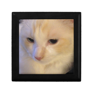 Close Up Red Point Ragdoll Cat Gift Box